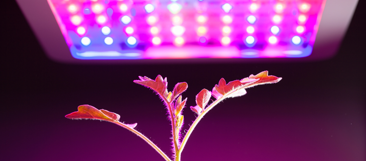 How many watts per square foot for led grow lights?