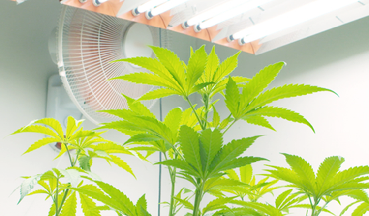 How Long to Keep Fans on in Grow Room