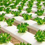 types of hydroponic gardening